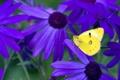 Картинка бабочка, контраст, цветы