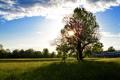 Картинка небо, солнце, облака, лучи, дерево, поляна, разнотравье