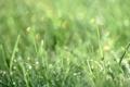 Картинка лето, трава, капли, макро, роса, блеск, размытие