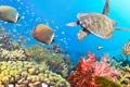 Картинка панорама, sea, panorama, Underwater, fishes, морских, черепахи