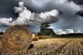 Картинка поле, небо, пейзаж, природа, сено