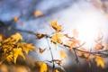 Картинка осень, блики, солнце, листва, жёлтый, цвет, листья