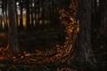 Картинка осень, лес, деревья, арт, дриада