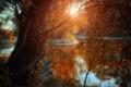 Картинка закат, озеро, дерево