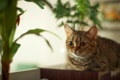 Картинка кошка, комната, растение, лежа