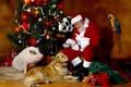 Картинка кошка, животные, кот, огни, стакан, шары, игрушки