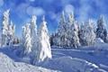 Картинка пейзаж, ели, деревья, природа, зима, елки, снег