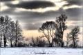 Картинка зима, снег, деревья, тучи