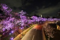 Картинка дорога, деревья, огни, подсветка