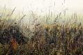Картинка трава, природа, паутина