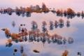Картинка вода, деревья, люди, лодка, наводнение, доска, Словения