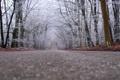Картинка дорога, деревья, пасмурно, вдаль, опавшие листья, снежок, поздняя осень