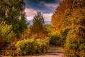 Картинка осень, листья, деревья, желтые, сад, дорожка, США