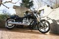 Картинка пальмы, стена, V-Rod, Muscle, Harley-Davidson, VRSCF, чёпер
