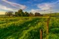 Картинка зелень, трава, деревья, столбы, забор, поля, сарай
