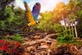 Картинка деревья, полет, попугай, кустарники