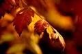 Картинка осень, листья, веточка, боке
