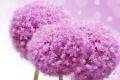 Картинка сиреневые цветочки, flowers lilac flowers, цветы