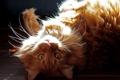 Картинка кошка, взгляд, свет
