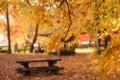 Картинка осень, листья, скамейка, парк, фокус, желтые, лавочка