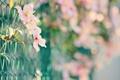 Картинка макро, цветы, сетка, забор