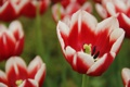 Картинка red, flower, beautiful