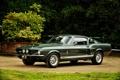 Картинка Ford, Shelby, форд, шелби, 1967, GT350