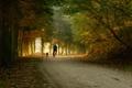 Картинка дорога, лес, собаки, настроение, прогулка, парни, велосипеды