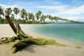 Картинка песок, море, небо, пальмы, залив, коряга