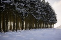 Картинка зима, деревья, пейзаж