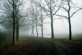 Картинка пейзаж, дорога, туман