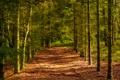 Картинка осень, лес, деревья, просека