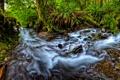 Картинка природа, лес, река, папоротники
