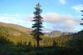 Картинка лес, горы, природа, озеро, Алтай