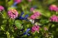 Картинка цветы, птица, колибри, полевые