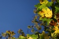 Картинка листья, макро, природа, растения