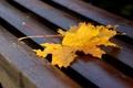 Картинка осень, листья, лавочка