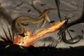 Картинка огонь, фантастика, полет, люди, арт, крылья, война