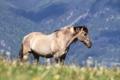 Картинка трава, горы, природа, конь