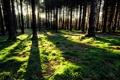 Картинка лес, трава, солнце, лучи, закат, тень, тени
