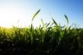 Картинка лето, небо, трава, солнце, свет, природа, утро