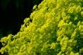 Картинка макро, цветы, жёлтый, фон, чёрный, стебли, зелёный