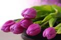Картинка букет, тюльпаны, капельки воды