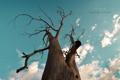 Картинка небо, природа, дерево