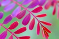 Картинка листья, осень, растение, ветка, цвет
