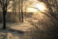 Картинка зима, лес, пейзаж, природа