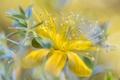 Картинка цветок, жёлтый, боке