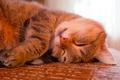 Картинка кошка, кот, морда, лапы, спит