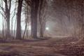 Картинка лес, осень, дорога, туман