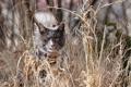 Картинка кошка, трава, природа
